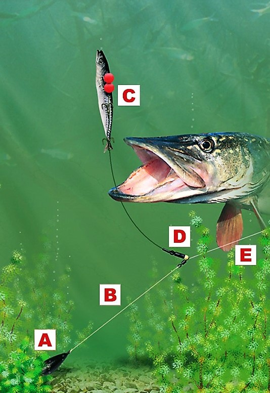 Top 5 tips for Autumn/Winter Pike fishing