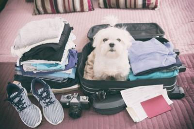 <h1>Holiday with your Pooch</h1>