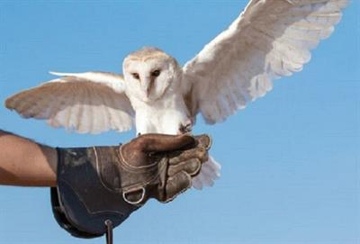 <h1>Falconry Display - Customers ONLY</h1>